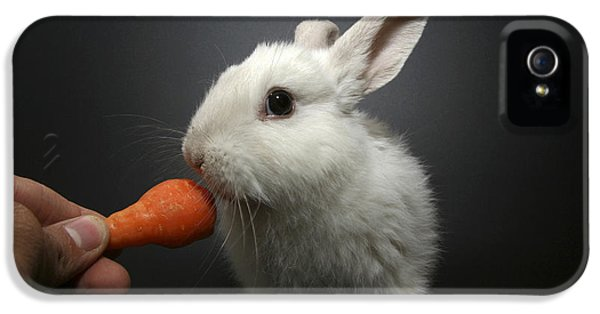 White Rabbit  IPhone 5s Case by Yedidya yos mizrachi