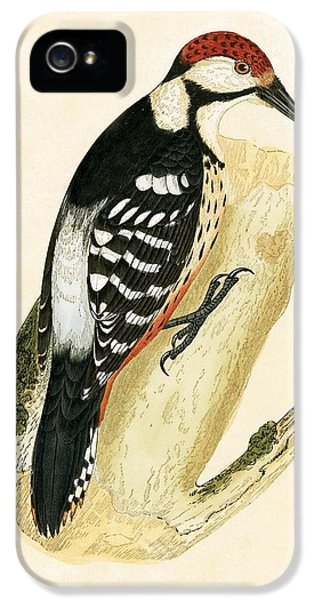 White Rumped Woodpecker IPhone 5s Case by English School