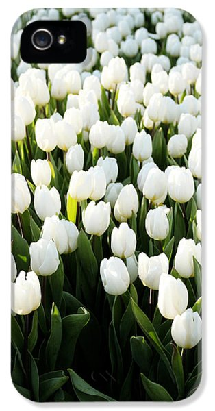 Tulip iPhone 5s Case - White Tulips In The Garden by Linda Woods