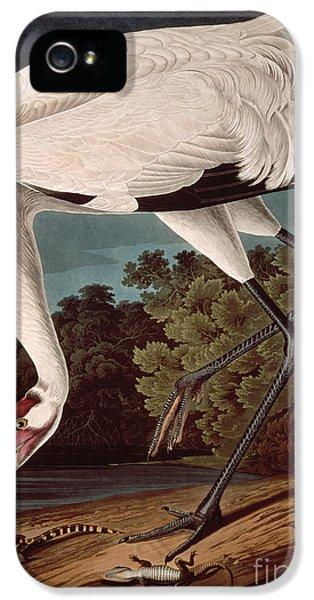 Crane iPhone 5s Case - Whooping Crane by John James Audubon