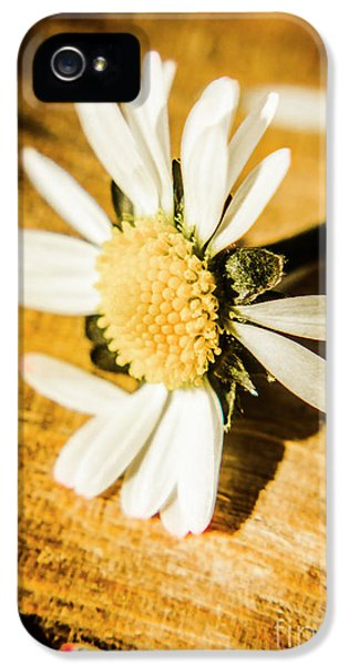 Daisy iPhone 5s Case - Wilt by Jorgo Photography - Wall Art Gallery