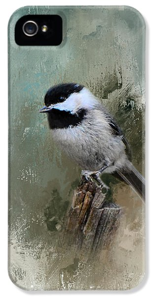 Winter Chickadee IPhone 5s Case by Jai Johnson
