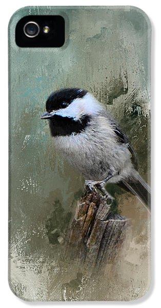 Winter Chickadee IPhone 5s Case by Jai Johnson