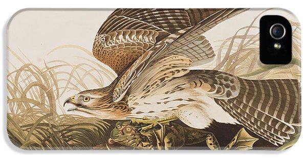 Winter Hawk IPhone 5s Case by John James Audubon