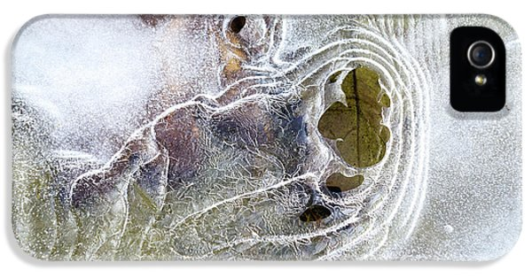 Winter Ice IPhone 5s Case by Christina Rollo