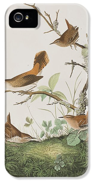 Winter Wren Or Rock Wren IPhone 5s Case