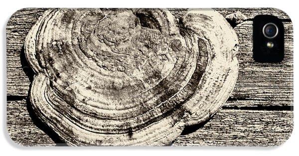 IPhone 5s Case featuring the photograph Wood Decay Fungi, Nagzira, 2011 by Hitendra SINKAR
