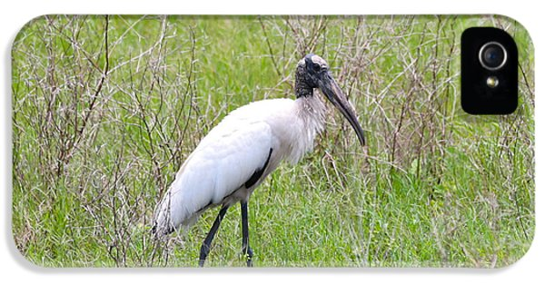 Wood Stork In The Marsh IPhone 5s Case by Carol Groenen