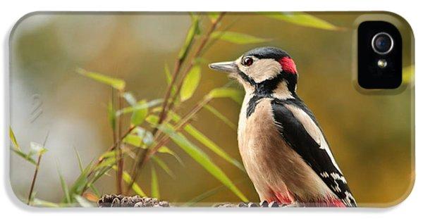 Woodpecker 3 IPhone 5s Case