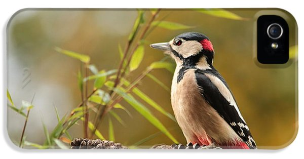 Woodpecker 3 IPhone 5s Case by Heike Hultsch