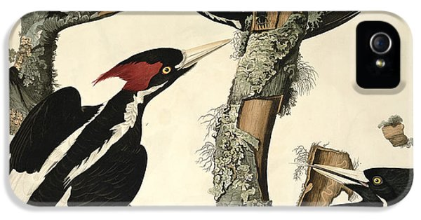 Woodpecker iPhone 5s Case - Woodpecker by John James Audubon
