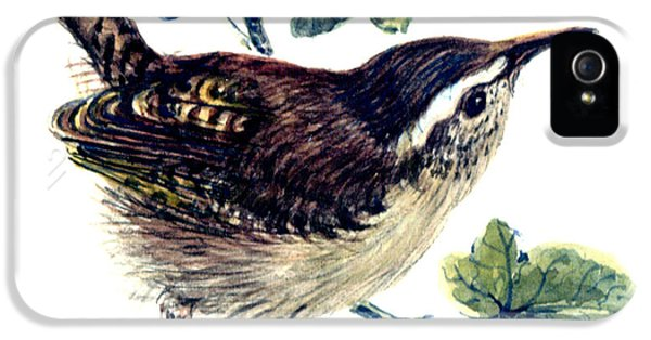 Wren In The Ivy IPhone 5s Case by Nell Hill