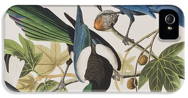 Magpies iPhone 5s Case - Yellow-billed Magpie Stellers Jay Ultramarine Jay Clark's Crow by John James Audubon
