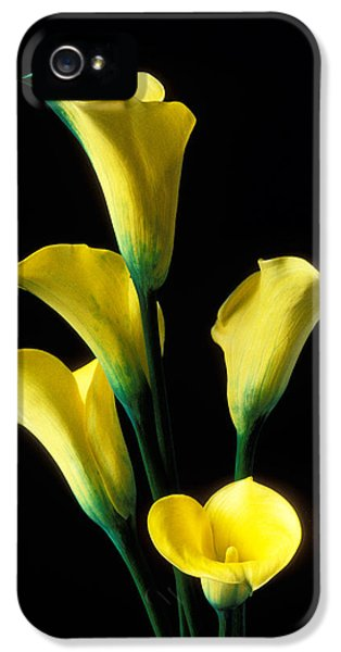 Lily iPhone 5s Case - Yellow Calla Lilies  by Garry Gay