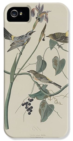 Yellow-crown Warbler IPhone 5s Case