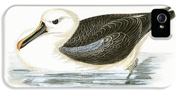 Albatross iPhone 5s Case - Yellow Nosed Albatross by English School