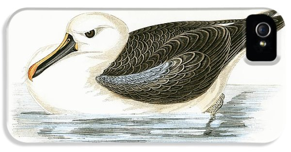 Yellow Nosed Albatross IPhone 5s Case by English School