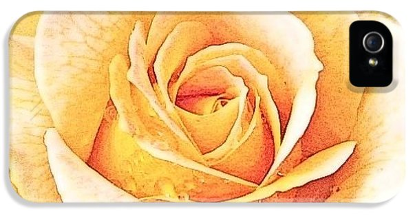 IPhone 5s Case featuring the photograph Yellow Rose by Karen Shackles