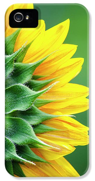 Yellow Sunflower IPhone 5s Case by Christina Rollo