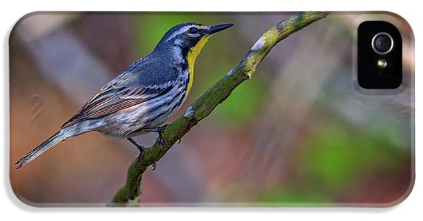Yellow-throated Warbler IPhone 5s Case by Rick Berk