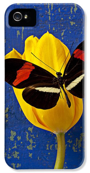 Tulip iPhone 5s Case - Yellow Tulip With Orange And Black Butterfly by Garry Gay