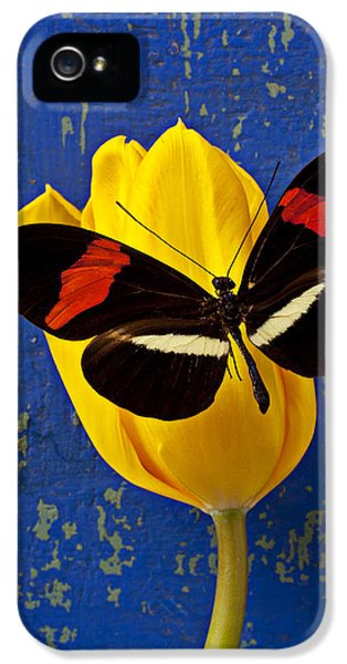 Yellow Tulip With Orange And Black Butterfly IPhone 5s Case by Garry Gay