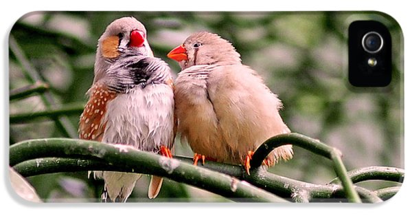 Zebra Finch Colloquy IPhone 5s Case
