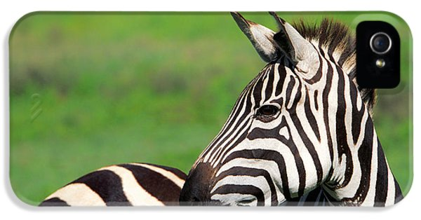 Zebra IPhone 5s Case by Sebastian Musial