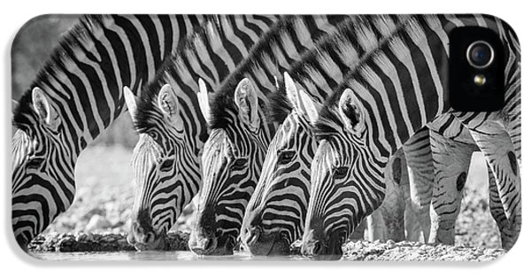 Zebras Drinking IPhone 5s Case by Inge Johnsson