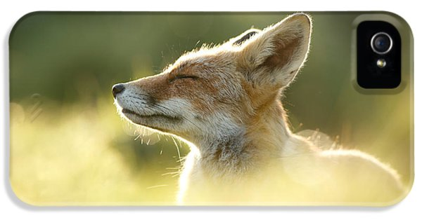 Fox iPhone 5s Case - Zen Fox Series - Zen Fox Up Close by Roeselien Raimond