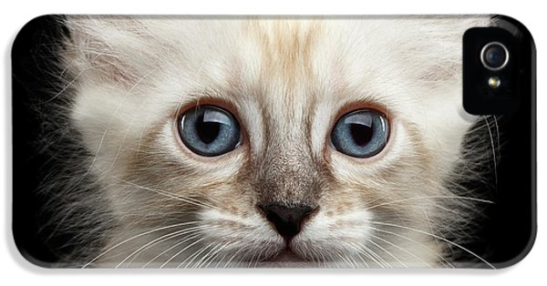 Cat iPhone 5s Case - Mekong Bobtail Kitty With Blue Eyes On Isolated Black Background by Sergey Taran
