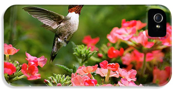Humming Bird iPhone 5s Case - Graceful Garden Jewel by Christina Rollo