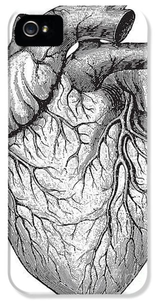Etching iPhone 5s Case - Human Heart  Vintage Illustrations From by Hein Nouwens