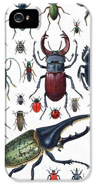 Etching iPhone 5s Case - Insects, Beetles And Scarab, Vintage by Morphart Creation
