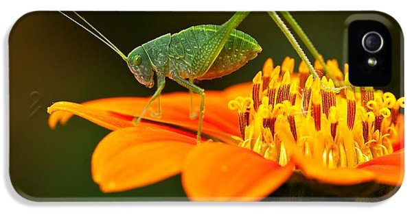 Macro iPhone 5s Case - Macro Photos From Insects, Nature And by Dudu Linhares