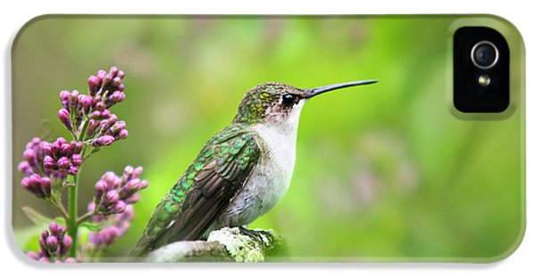 Humming Bird iPhone 5s Case - Spring Beauty Ruby Throat Hummingbird by Christina Rollo