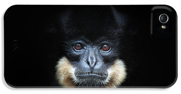 Armed iPhone 5s Case - Yellow-cheeked Gibbon, Nomascus by Ondrej Prosicky