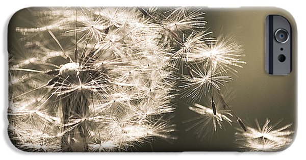IPhone 6 Case featuring the photograph Dandelion by Yulia Kazansky