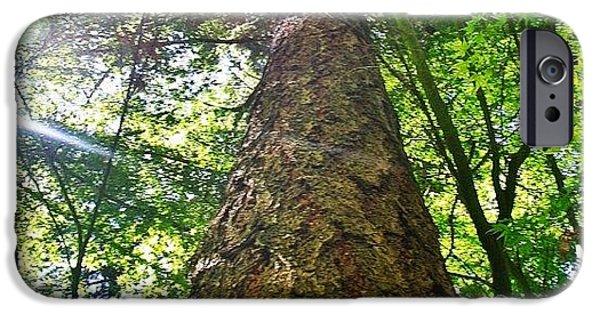 Sunny iPhone 6 Case - Douglas Fir Tree Rising by Anna Porter