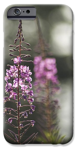 IPhone 6 Case featuring the photograph Fireweed by Yulia Kazansky