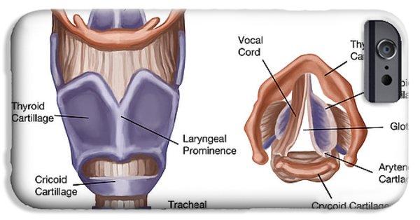 Vocal Cord iPhone 6 Cases | Fine Art America