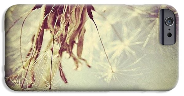 #mgmarts #dandelion #makeawish #wish IPhone 6 Case