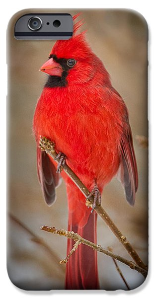 Northern Cardinal IPhone 6 Case by Bill Wakeley