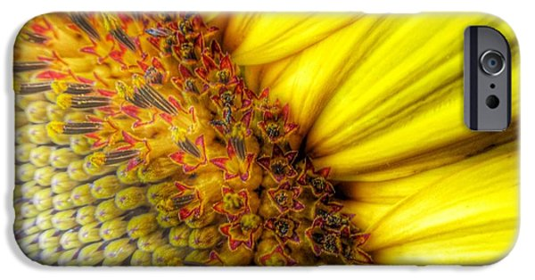 Sunflower Seeds iPhone 6 Case - Sunrise by Marianna Mills