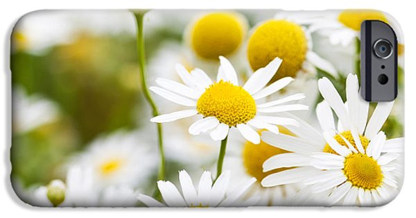 Blossom iPhone Cases - Chamomile flowers iPhone Case by Elena Elisseeva