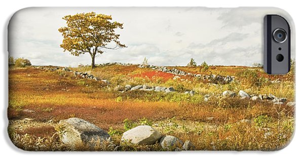 Blue Mountains Red iPhone Cases - Single Tree And Rock Wall In Maine Blueberry Field iPhone Case by Keith Webber Jr