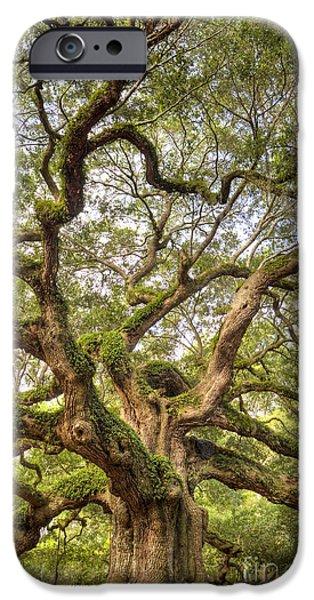 Oak Trees iPhone Cases - Angel Oak Tree Johns Island SC iPhone Case by Dustin K Ryan