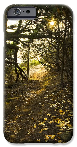 Autumn Trail In Woods IPhone 6 Case by Yulia Kazansky