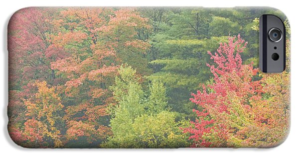 Fall iPhone Cases - AutumnTrees And Fog iPhone Case by Keith Webber Jr
