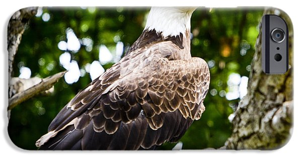 IPhone 6 Case featuring the photograph Bald Eagle by Ricky L Jones